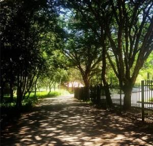 trees montessori preschool in sandton